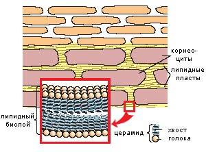 керамиды